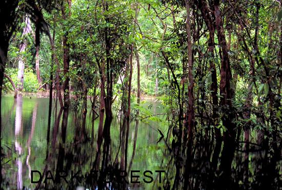 PeruisAmazonrainforest2