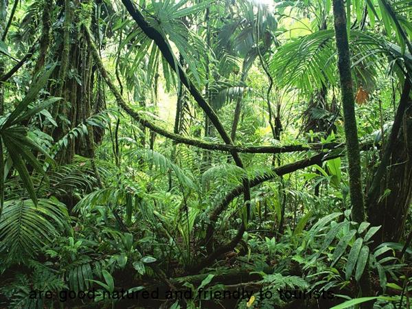PeruisAmazonrainforest3