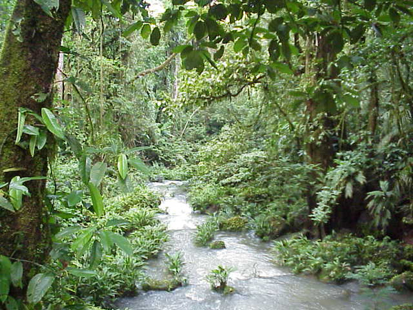 PeruisAmazonrainforest4