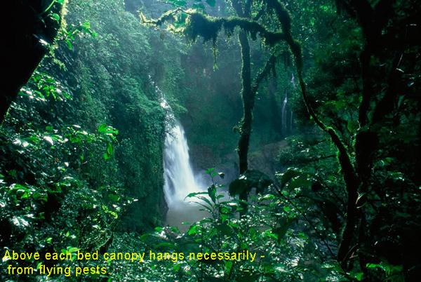 PeruisAmazonrainforest5