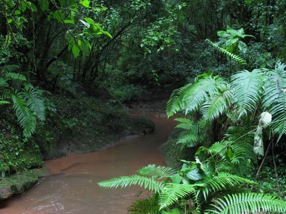 PeruisAmazonrainforest6